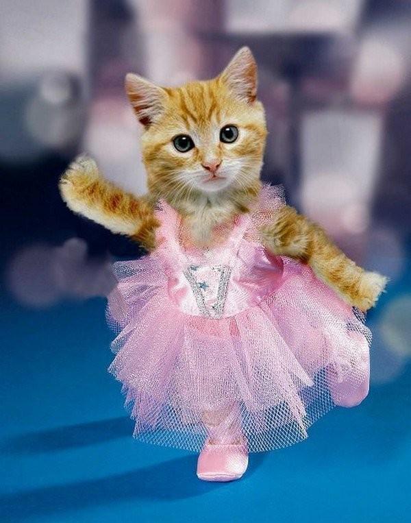 Chat danseur
