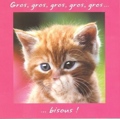 """Résultat de recherche d'images pour """"gros bisous chaton"""""""
