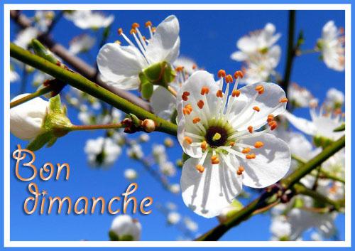 http://imagesetpassion.i.m.pic.centerblog.net/o/e0096c64.jpg